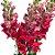 Boca de Leão Vermelha Pacote para Decoração e Arranjos - Imagem 2
