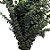 Folhagem Eucalipto para Composição de Buquês e Arranjos - Imagem 3