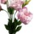 Lisianthus Rosa Bebê Pacote - Imagem 3