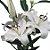 Lírios de Corte Branco Pacote 05 Hastes - Imagem 1