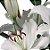 Lírios de Corte Branco Pacote 05 Hastes - Imagem 3