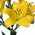 Lírios de Corte Amarelo Pacote 05 Hastes - Imagem 3