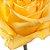 Rosas Amarelas - 01 Pacote com 20 unidades - Escolha o tamanho abaixo: - Imagem 3