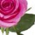 Rosas Pink - 01 Pacote com 20 unidades - Escolha o tamanho abaixo: - Imagem 3