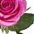 Rosas Pink - 01 Pacote com 20 unidades - Escolha o tamanho abaixo: - Imagem 15