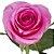 Rosas Pink - 01 Pacote com 20 unidades - Escolha o tamanho abaixo: - Imagem 2