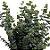 Folhagem Eucalipto para Decorar Mesa de Jantar - Imagem 2