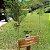 Óleo Essencial Tea Tree Branco  (Melaleuca) - Imagem 1
