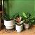 Trio Vasos Loft Polietileno com suporte - 3 peças - Imagem 5