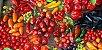 Sementes de Pimentas Sortidas: 100 Sementes - Imagem 3
