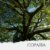 Óleo de Copaíba - Imagem 1