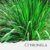 Óleo Essencial de Citronela Orgânico - Imagem 1