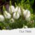 Óleo Essencial de Melaleuca (QT Terpinen-4-ol) - Imagem 1