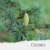 Óleo Essencial de Cedro Atlas - Imagem 1