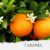 Óleo Essencial de Laranja Doce - Imagem 1