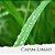 Óleo Essencial de Capim Limão - Imagem 1