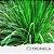 Óleo Essencial de Citronela - Imagem 1