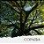 Óleo de Copaiba - Imagem 1