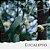 Óleo Essencial de Eucalipto - Imagem 1