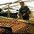 SÍTIO FORQUILHA DO RIO - CAPARAÓ AMARELO - The Good Coffee Roasters - Imagem 3