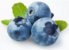 Mirtilo Ou Blueberry - Lindas Mudas - Imagem 1