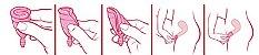 Coletor Menstrual Tipo 1 - Fleurity - Imagem 2