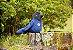 Pelúcia Gralha Azul - Imagem 1