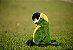 Pelúcia Papagaio Verdadeiro - Imagem 1