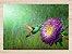 Quadro Pássaro Beija Flor com Moldura E Vidro - Imagem 2