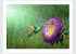 Quadro Pássaro Beija Flor com Moldura E Vidro - Imagem 3