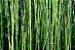 Difusor de Varetas Ekomist Bambu - 100ml - Imagem 3