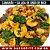Kit - Eu Amo Frutos do Mar - Imagem 7