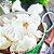 Couve-Flor Cozida no Vapor - Imagem 1