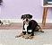 Benebone Wishbone Bacon Dog Chew Toy - Imagem 2