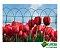 Tela Forma Viva - Malha 8x15 cm / Rolo de 25 m - Imagem 3