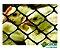 Tela Plástica Galinheiro - Fio 2,00 mm - Malha 5 cm - Altura de 1,0 m - Imagem 6