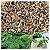 250 Semente de Moringa Olifera Frete Gratis  - Imagem 1