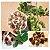 250 Semente de Moringa Olifera Frete Gratis  - Imagem 2