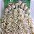 Cabelo Orgânico Tecido Cacheado Loiro Platinado Kit 8 telas 60 cm 320g - Imagem 2
