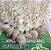 Cabelo Orgânico Tecido Cacheado Loiro Platinado Kit 8 telas 60 cm 320g - Imagem 4