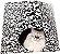 Octa Cat - Imagem 1