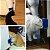 Catit- Escova De Parede Para Gatos Com Catnip. Marca Cat - Imagem 3