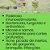 Óleo Essencial Bioessência Orgânico - TEA TREE (Melaleuca alternifolia)  - 10 ml - Imagem 2