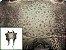 Pele de Rã Exótica - Cor: Natural  - Imagem 1