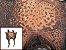 Pele de Rã Exótica - Cor: Bege - Imagem 1