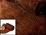 Rolos de Nobuck de Porco tipo Javali - Cor: Castor - 1.4/1.8 mm - Imagem 1