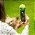 Bolinha para Selfie - Dog - Imagem 2