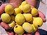 Marula ou Amarula - A verdadeira Fruta Que Produz o Famoso Licor - Raridade - Muda Clonada Produz em Vaso - Imagem 2