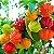 Kit 10 Frutíferas - Lichia - Goiaba Gigante - Amora Gigante - Jabuticaba - Manga - Morango - Araçá - Pitanga - Camu-Camu - Cereja - Imagem 3