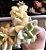 Suculenta Graptoveria Titubans Variegata - Importada - Imagem 5
